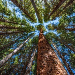Green bond carbon rating could help lower emissions, guide investors – BIS