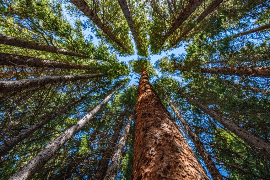 9 Ways You Can Plant More Trees This Year