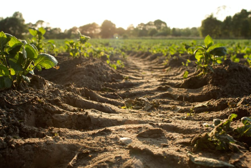 There is a lot of money on the table with carbon markets. But farmers are skeptical.