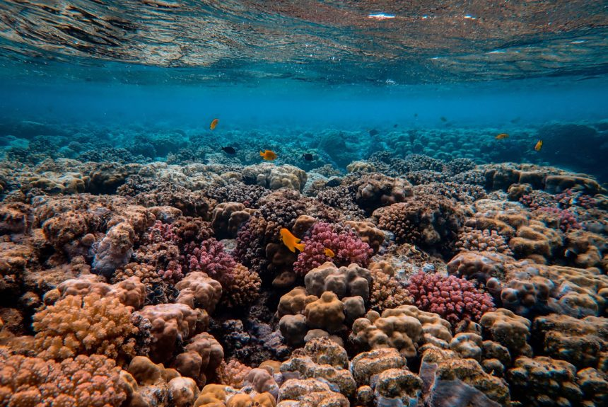 How One Company Is Restoring Coral To Combat Climate Change's Coastal Impact