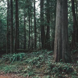 America's forest sector is ready for climate action and rural America can benefit