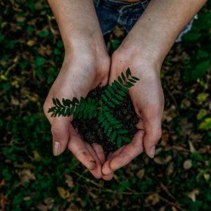 5 Sustainable Living Ideas
