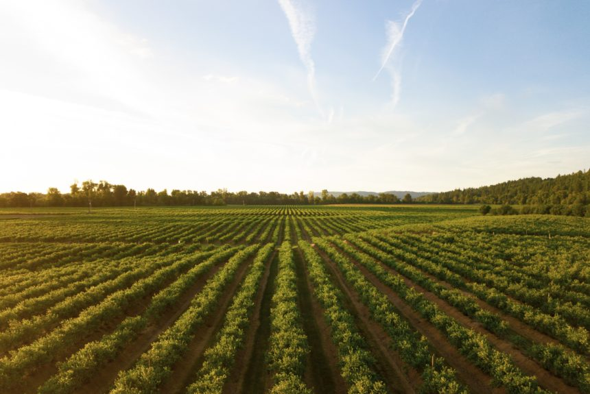Agriculture Industry Bets on Carbon as a New Cash Crop