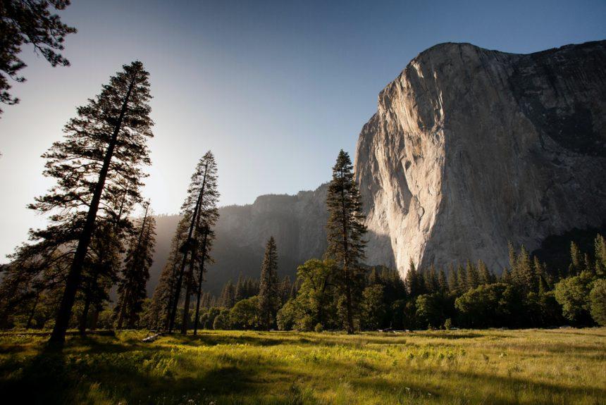 How Economic Freedom Creates a Healthy Environment
