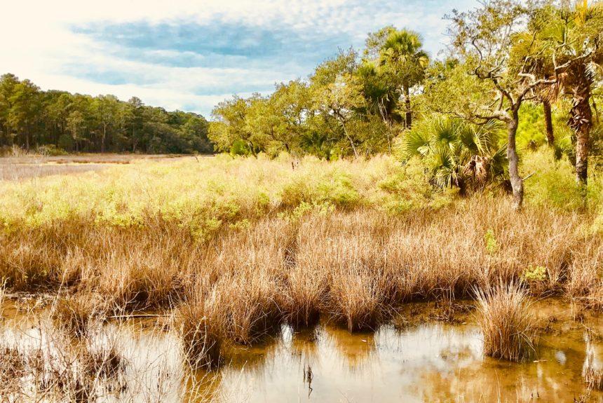 Military and Environmentalists Align to Protect Key Coastal Salt Marsh