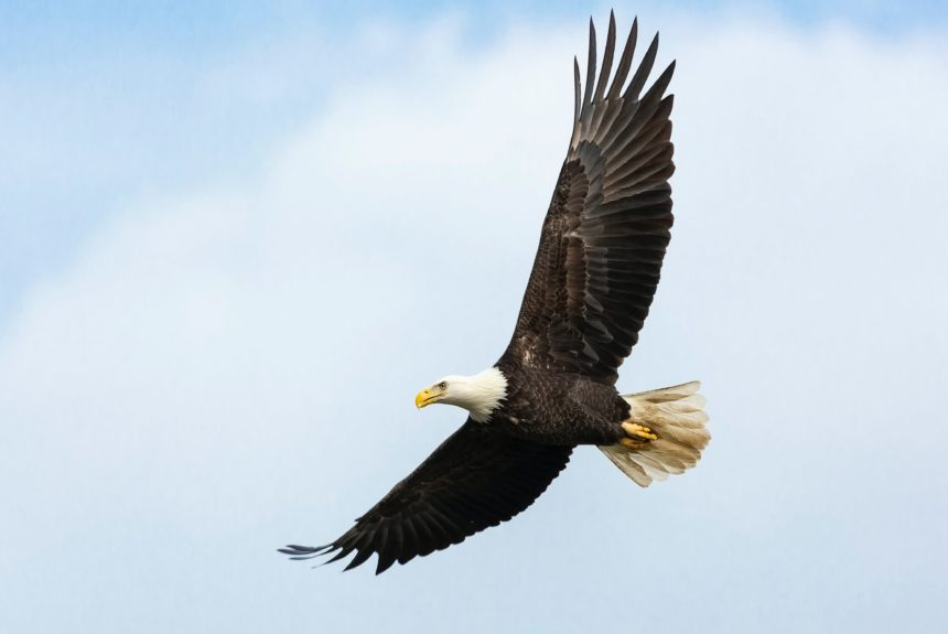 The Endangered Species Act Needs Fixing; Better Incentives for Landowners Could be a Start