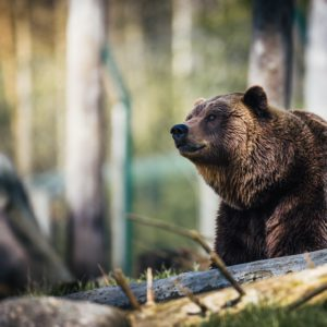 Endangered species recovery requires flexibility, not strict regulations