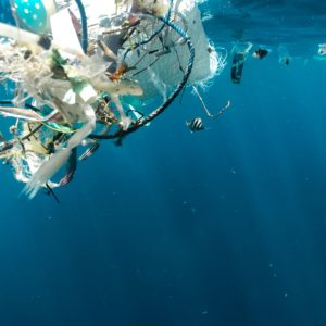 Meet Jellyfishbot, the robot that likes to eat sea trash