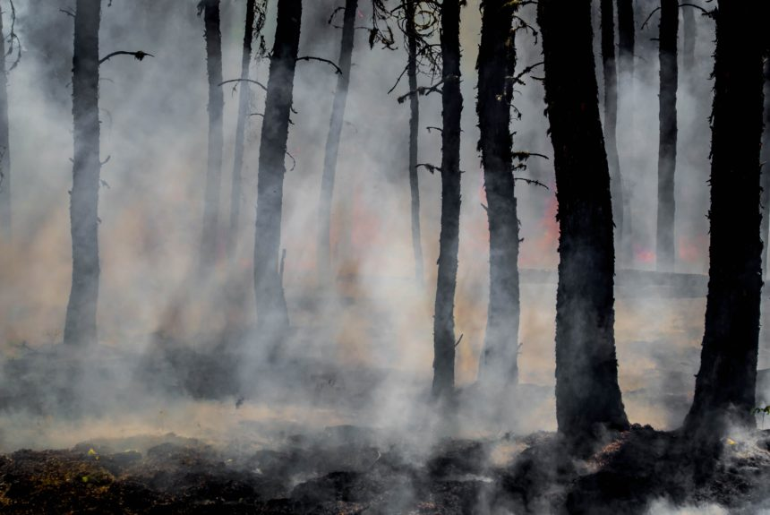 We're Paying the Price for Refusing Controlled Burns