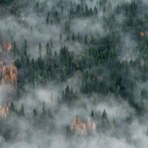Prioritize Forest Management to Reduce Wildfire Risk