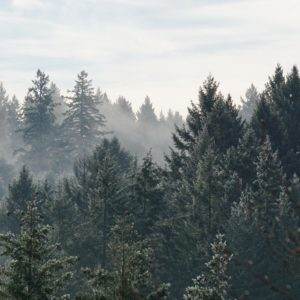 Infrastructure bill protects forests for climate resilience