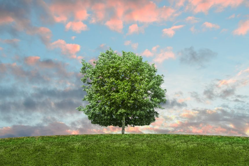 How Conservatives Should Approach the New IPCC Report