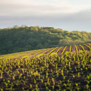 Cargill aims to connect farmers to carbon offset buyers
