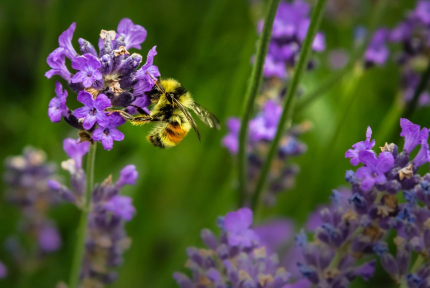 What should you plant to support bees and other pollinators?
