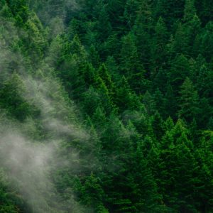 DroneSeed's $36M A round makes it a one-stop shop for post-wildfire reforestation