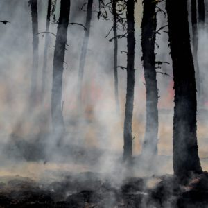 Why The South Is Decades Ahead Of The West In Wildfire Prevention