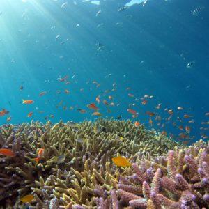 Reef Re-Growing Breakthrough Seeks to Reproduce Lost Coral Reefs