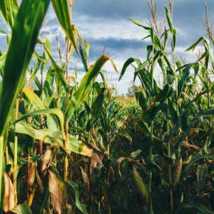 Largest U.S. biofuels producer pledges carbon neutrality by 2050
