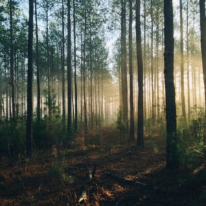 Trees To Capture Carbon (And Cash) In Nation's First Project On State Forest Land