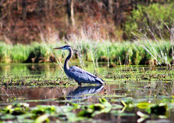 U.S. eyes wetland restoration as hedge against climate change