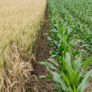 Meet Marrone Bio Innovations: Pioneer in Bio-Based Pest Solutions