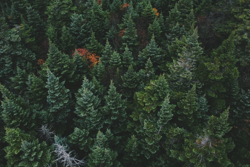 Investing in America's Forests is Key to Improving Environmental Health