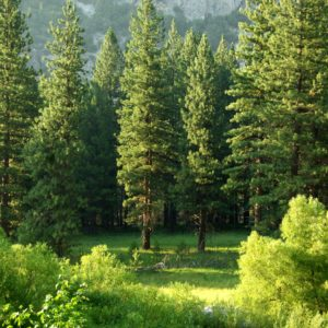 Forest Restoration 101