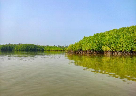 The Mangrove Foundation is Bringing Sustainability to India's Maharashtra Villages